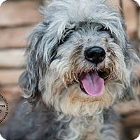Adopt A Pet :: Orchid - Scottsdale, AZ