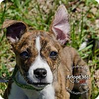 Adopt A Pet :: Cat - Woodbridge, CT