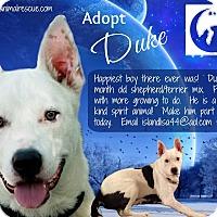 Adopt A Pet :: Duke - Holmes Beach, FL