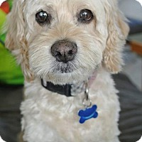 Adopt A Pet :: Paloma - Sherman Oaks, CA
