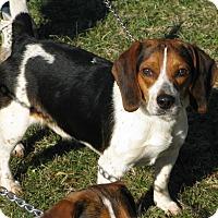 Adopt A Pet :: Jack - Dumfries, VA