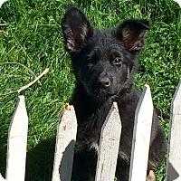 Adopt A Pet :: Raquel Welch - Dayton, OH