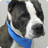 Adopt A Pet :: Sven - Topeka, KS