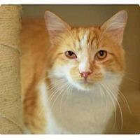 Adopt A Pet :: MoMo - Modesto, CA