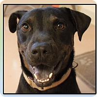Adopt A Pet :: Zeus - Mineral Wells, TX