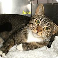 Adopt A Pet :: June - El Cajon, CA