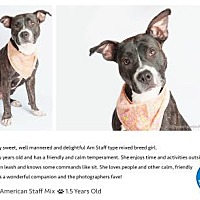 Adopt A Pet :: Gypsy - Pompano Beach, FL