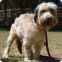 Adopt A Pet :: Cali and Puppies - Penngrove, CA