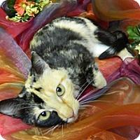 Adopt A Pet :: Bristol - Columbus, NE