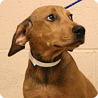 Adopt A Pet :: Larry Joe~meet me~ - Glastonbury, CT