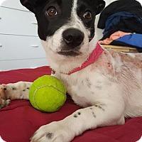 Adopt A Pet :: Lil Wonder - Valencia, CA