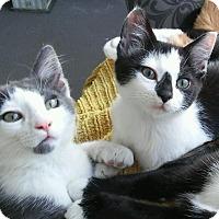 Adopt A Pet :: Chapel & Wolfie - Kirkland, WA