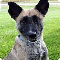 Adopt A Pet :: Ash - Fremont, NE