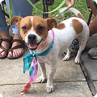 Adopt A Pet :: Coco - Rockwall, TX