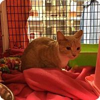Adopt A Pet :: Nutter Butter - Janesville, WI