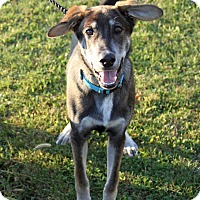 Adopt A Pet :: Whopper - Joliet, IL