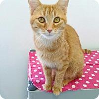Adopt A Pet :: Chaos - Austintown, OH
