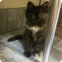 Adopt A Pet :: Pegasus - Sherman Oaks, CA