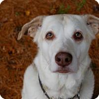 Adopt A Pet :: Dog ID# 2066 - Lake City, MI