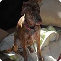 Adopt A Pet :: Rani 4 Monts - C/S & Denver Metro, CO