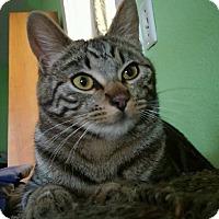 Adopt A Pet :: TABITHA - Brea, CA