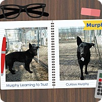Adopt A Pet :: Murphy - Clear Lake, IA