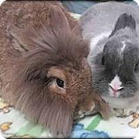 Adopt A Pet :: Pebbles & Xio Niao - Williston, FL