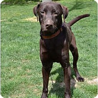 Adopt A Pet :: Tebow - Lewisville, IN