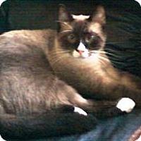 Adopt A Pet :: Keegan - Chesterland, OH