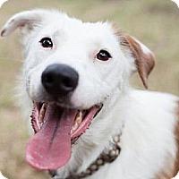 Adopt A Pet :: Jingo - Austin, TX