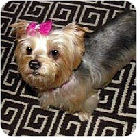 Adopt A Pet :: Desire - Omaha, NE