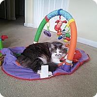 Adopt A Pet :: *Piper - Winder, GA