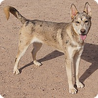 Adopt A Pet :: SPIRIT - Apache Junction, AZ