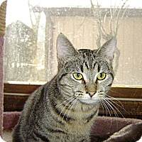 Adopt A Pet :: Curlie - Mundelein, IL