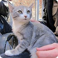 Adopt A Pet :: Gem - Brooklyn, NY