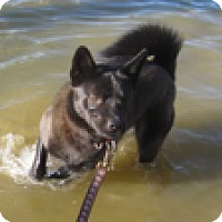 Adopt A Pet :: Razzle - Philadelphia, PA