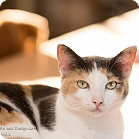 Adopt A Pet :: Ona - Fountain Hills, AZ