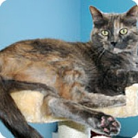 Adopt A Pet :: Lena - Fairfax, VA