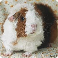 Adopt A Pet :: Miss Jujubee - Santa Barbara, CA
