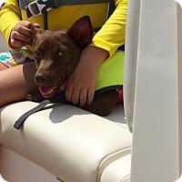 Adopt A Pet :: Bell - Austin, TX