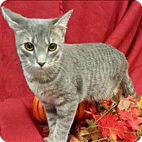 Adopt A Pet :: Rambo - Neosho, MO