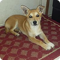 Adopt A Pet :: Cheri (fostered in Louisiana) - Cranston, RI