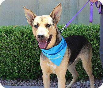 German Shepherd Dog Mix Dog for adoption in Las Vegas, Nevada - AMAZON