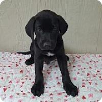 Adopt A Pet :: Jeb - Clarksville, AR