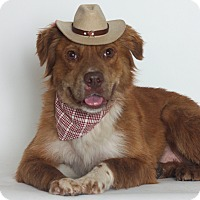 Adopt A Pet :: Roxie - Stockton, CA