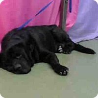 Adopt A Pet :: URGENT on 9/26 @DEVORE - San Bernardino, CA