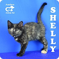 Adopt A Pet :: Shelly - Carencro, LA