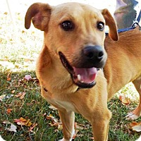 Adopt A Pet :: Noticians - Lincolnton, NC