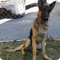 German Shepherd Dog Mix Dog for adoption in Alpharetta, Georgia - ClydePowell