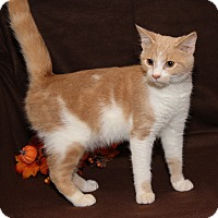Adopt A Pet :: Sir Galahad (Neutered) - Marietta, OH